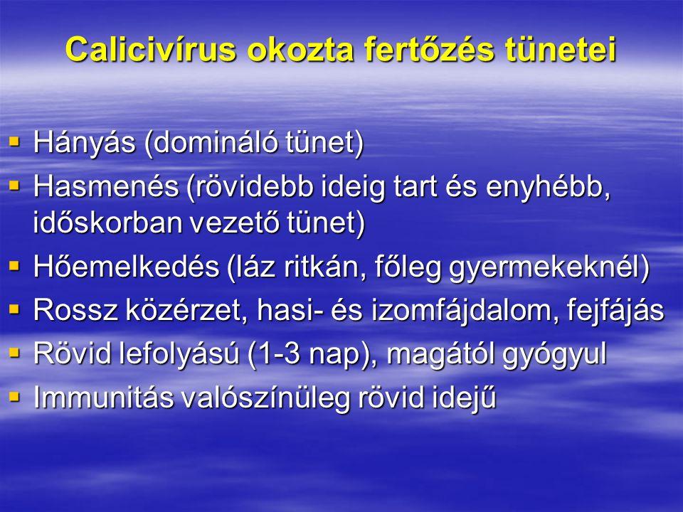 Calicivírus okozta fertőzés tünetei