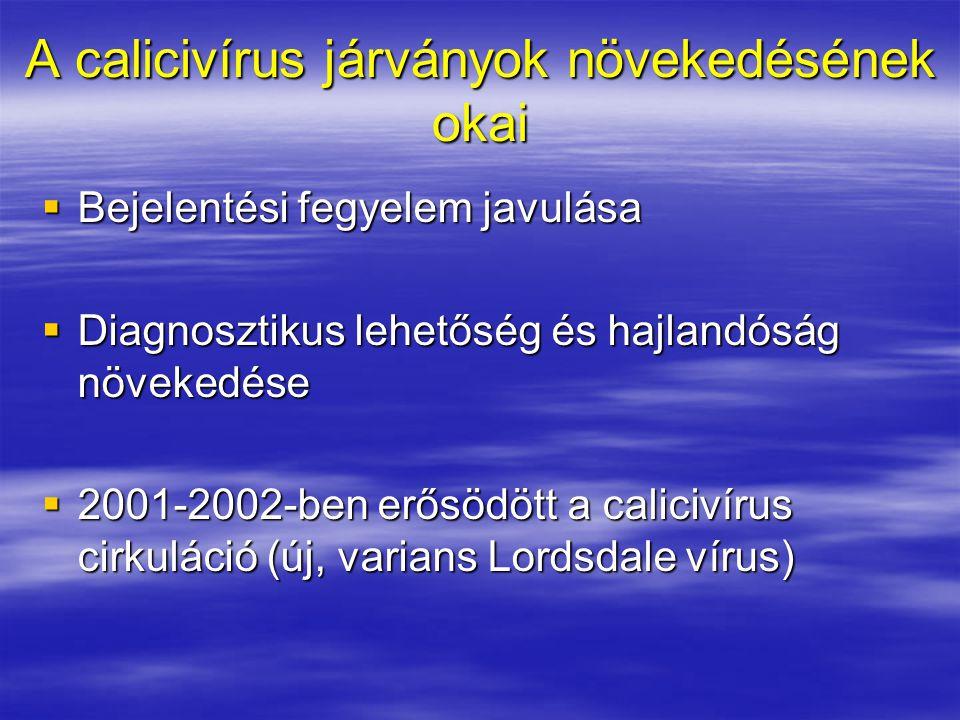 A calicivírus járványok növekedésének okai