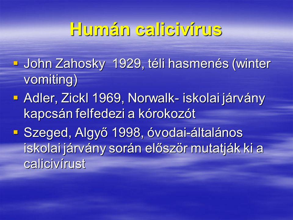 Humán calicivírus John Zahosky 1929, téli hasmenés (winter vomiting)