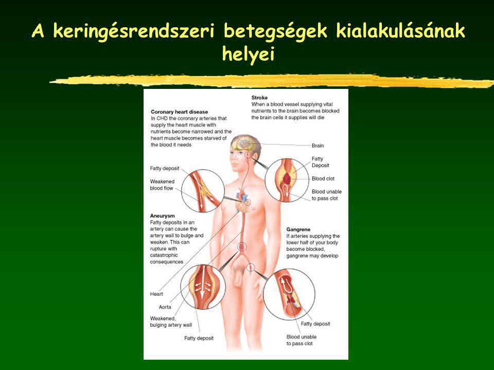 A keringésrendszeri betegségek kialakulásának