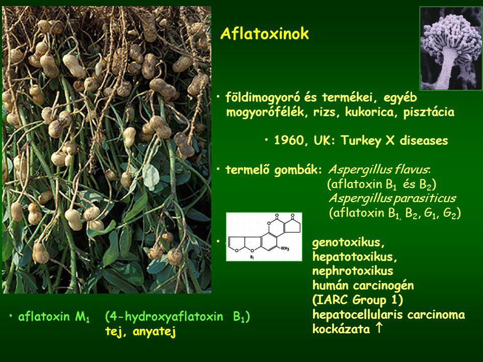 Aflatoxinok földimogyoró és termékei, egyéb