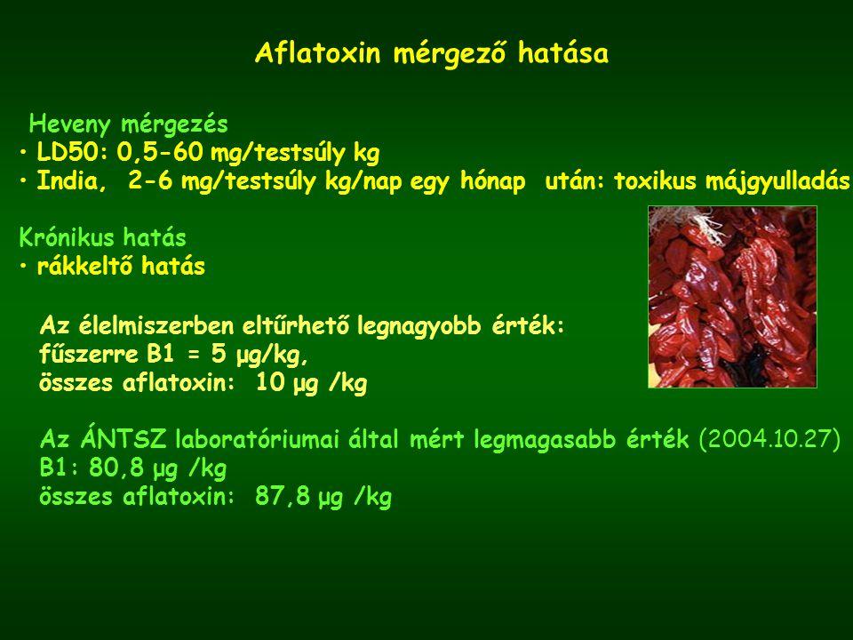 Aflatoxin mérgező hatása
