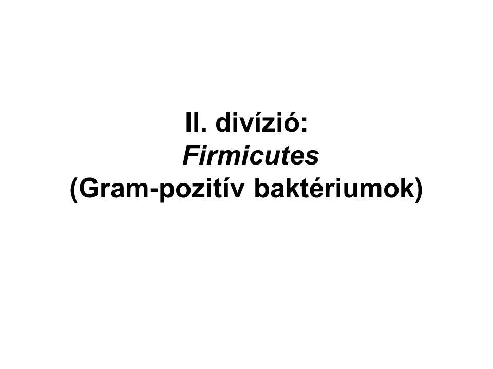 II. divízió: Firmicutes (Gram-pozitív baktériumok)