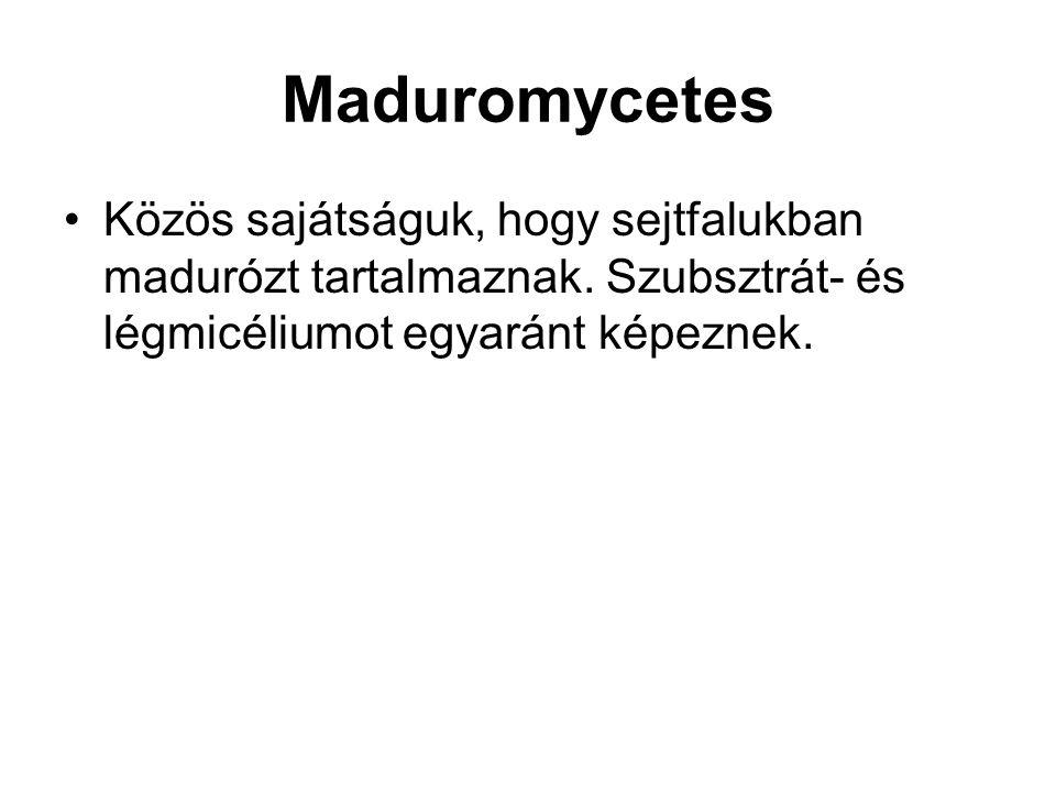 Maduromycetes Közös sajátságuk, hogy sejtfalukban madurózt tartalmaznak.