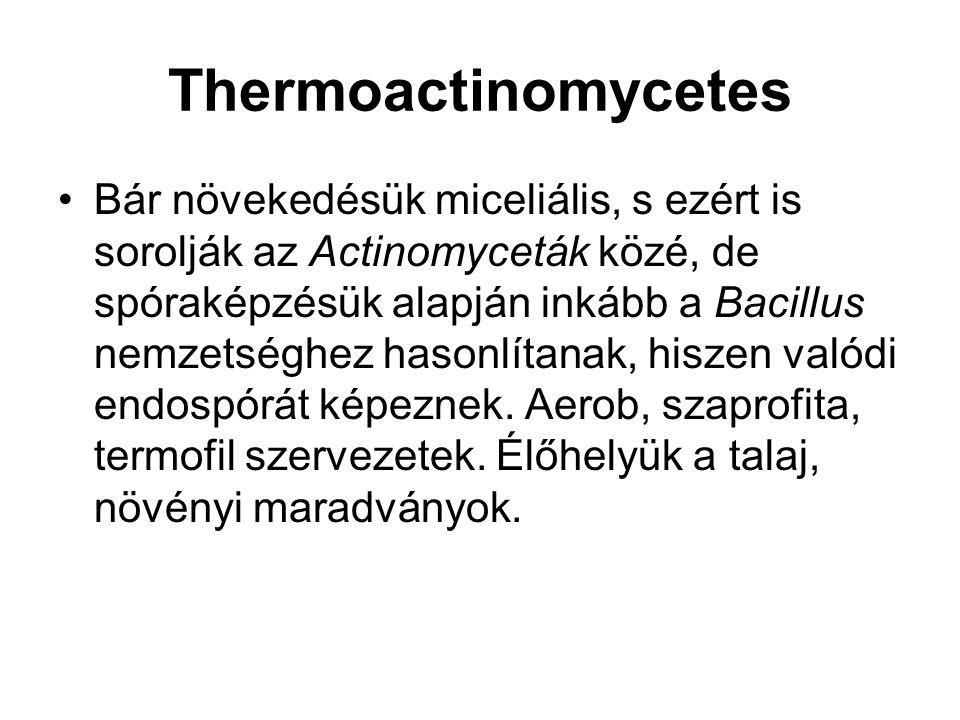 Thermoactinomycetes