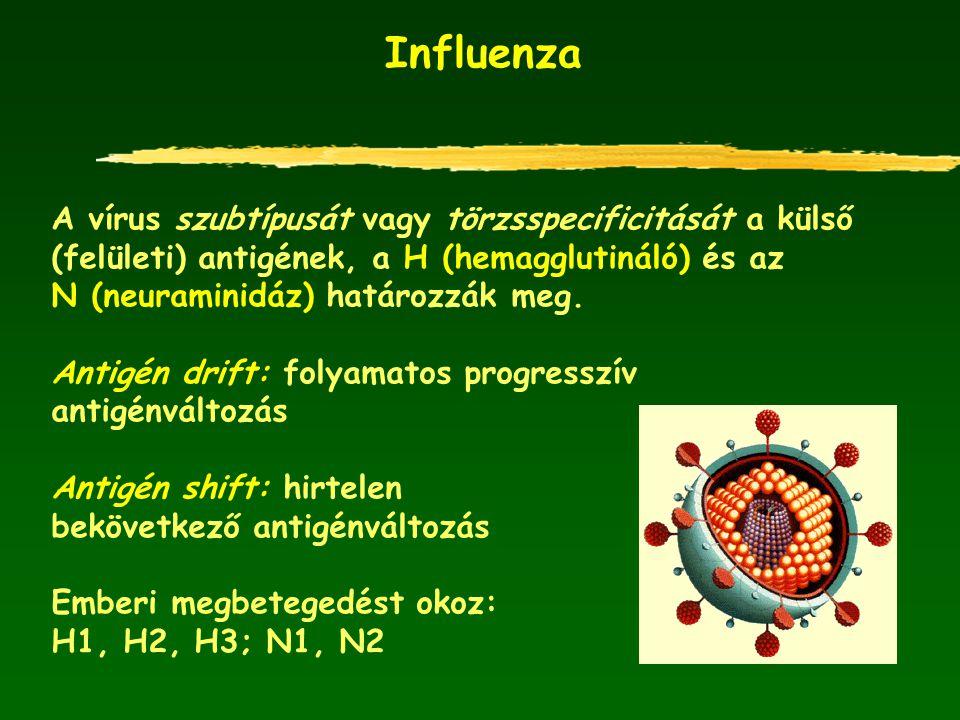 Influenza A vírus szubtípusát vagy törzsspecificitását a külső