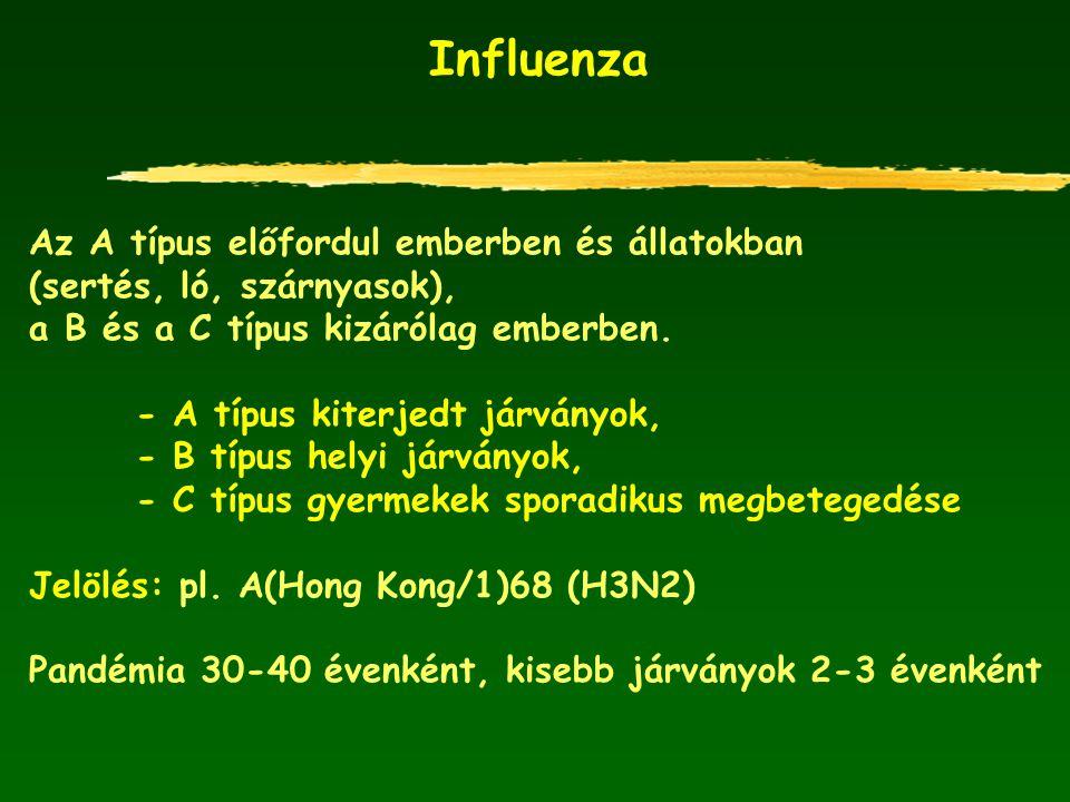 Influenza Az A típus előfordul emberben és állatokban