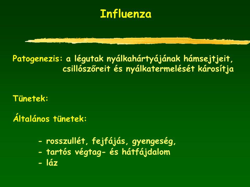 Influenza Patogenezis: a légutak nyálkahártyájának hámsejtjeit,