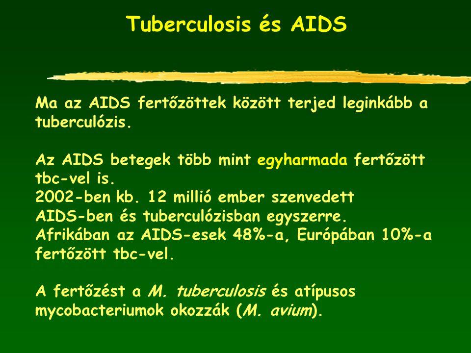 Tuberculosis és AIDS Ma az AIDS fertőzöttek között terjed leginkább a