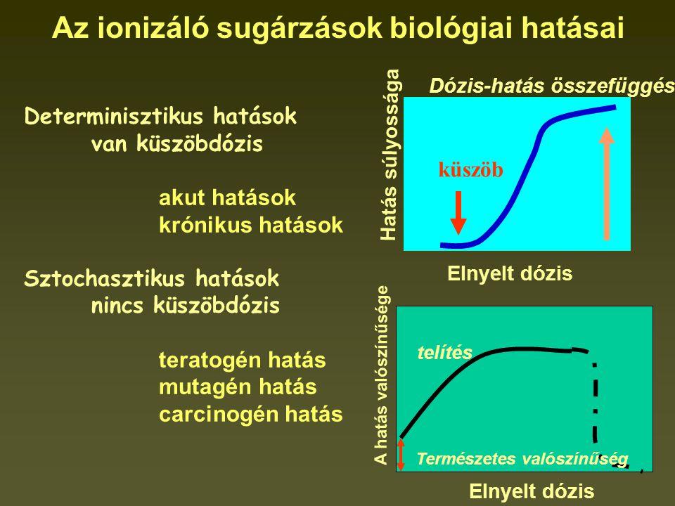 Az ionizáló sugárzások biológiai hatásai