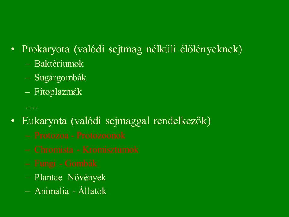 Prokaryota (valódi sejtmag nélküli élőlényeknek)