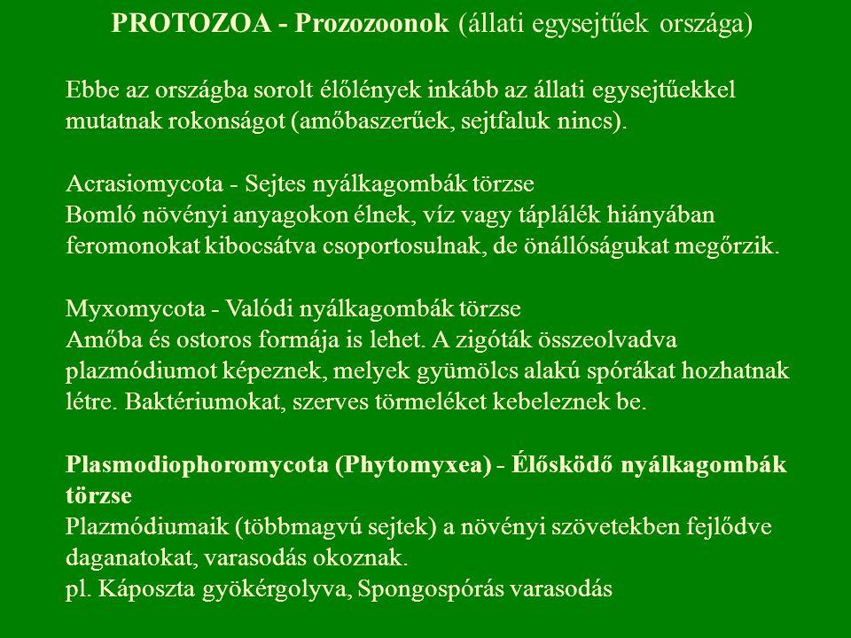 PROTOZOA - Prozozoonok (állati egysejtűek országa)