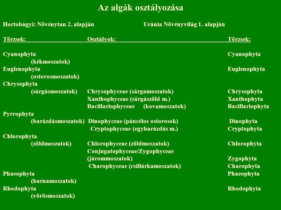 Az algák osztályozása Hortobágyi: Növénytan 2. alapján Uránia Növényvilág 1. alapján. Törzsek: Osztályok: Törzsek: