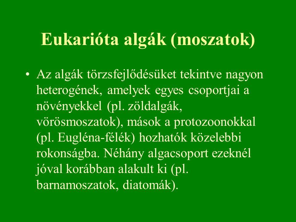 Eukarióta algák (moszatok)