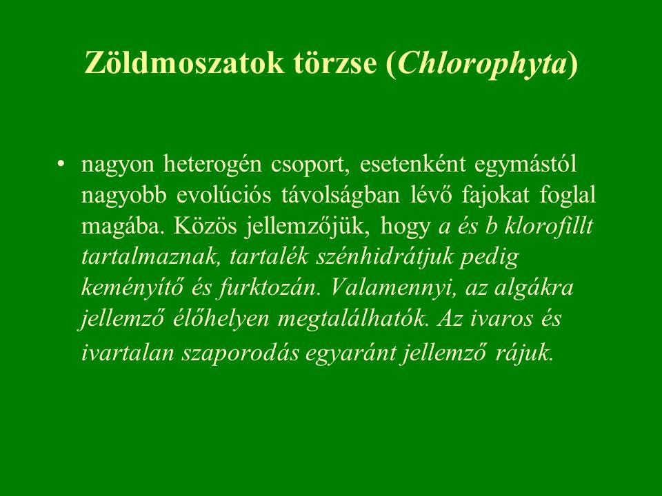 Zöldmoszatok törzse (Chlorophyta)