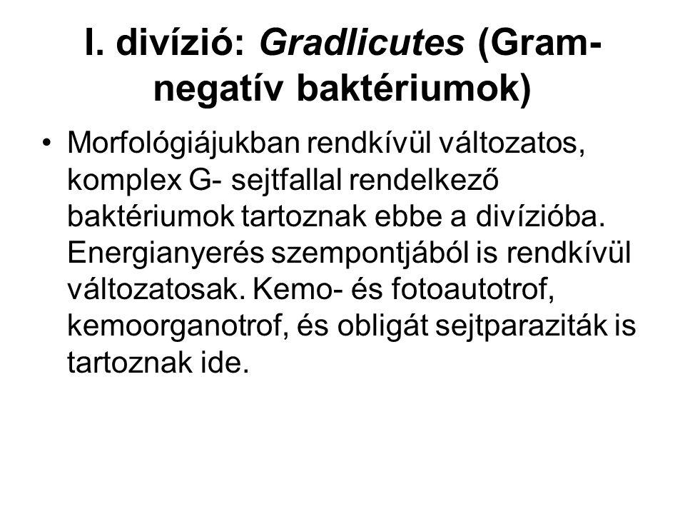 I. divízió: Gradlicutes (Gram-negatív baktériumok)