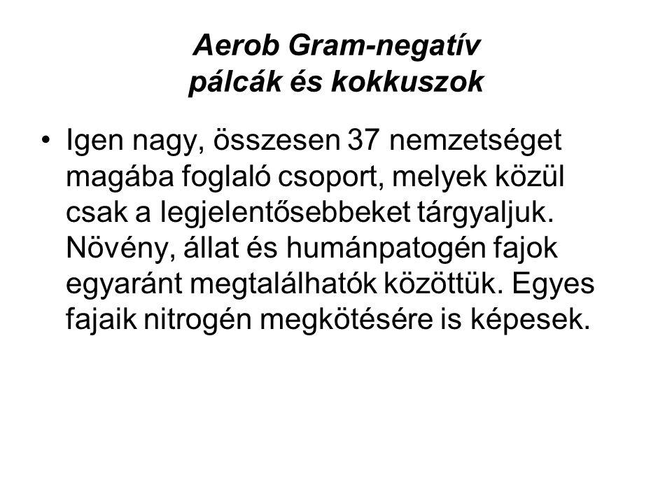 Aerob Gram-negatív pálcák és kokkuszok