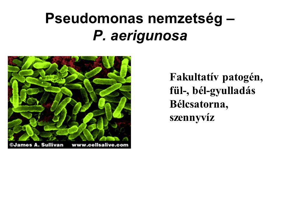 Pseudomonas nemzetség – P. aerigunosa