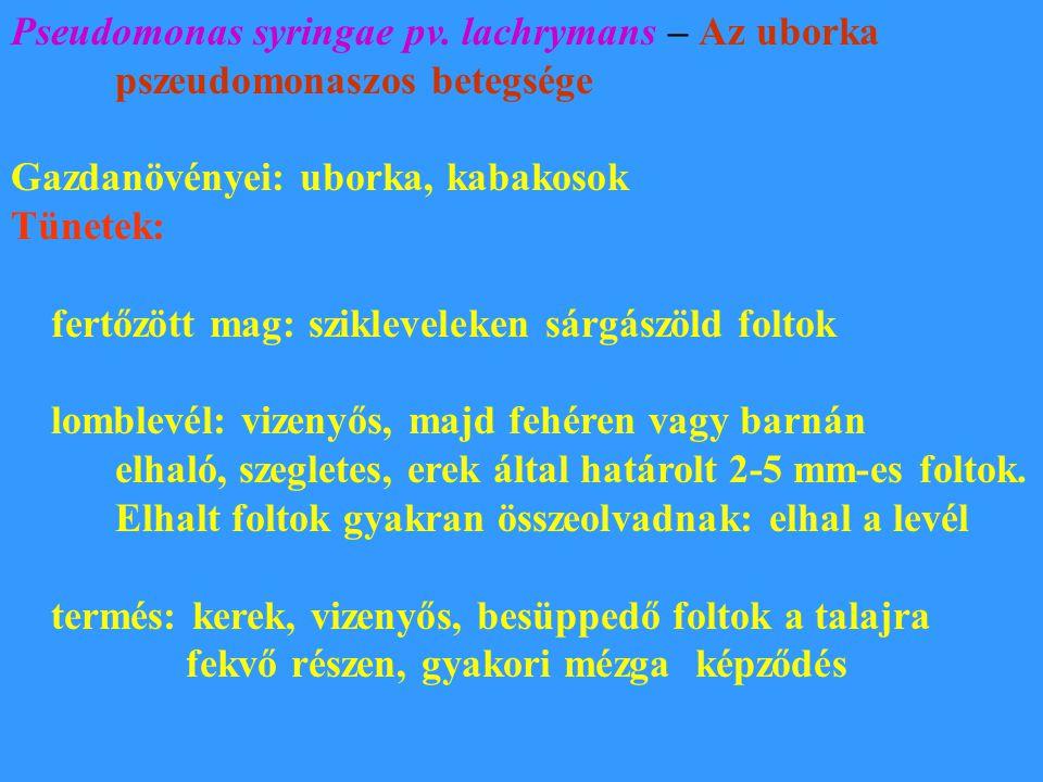 Pseudomonas syringae pv. lachrymans – Az uborka