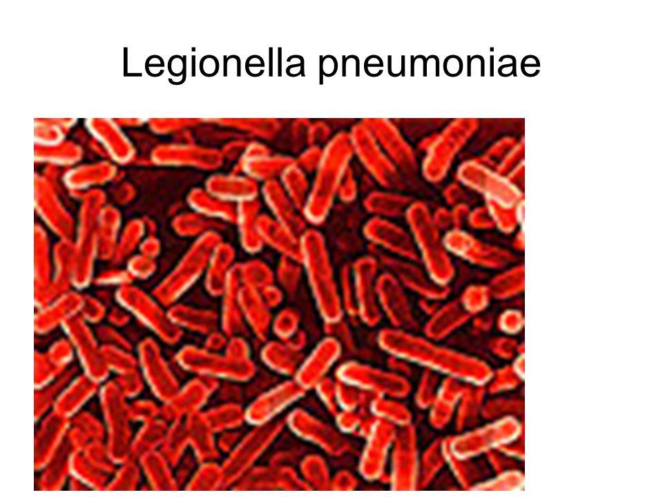 Legionella pneumoniae