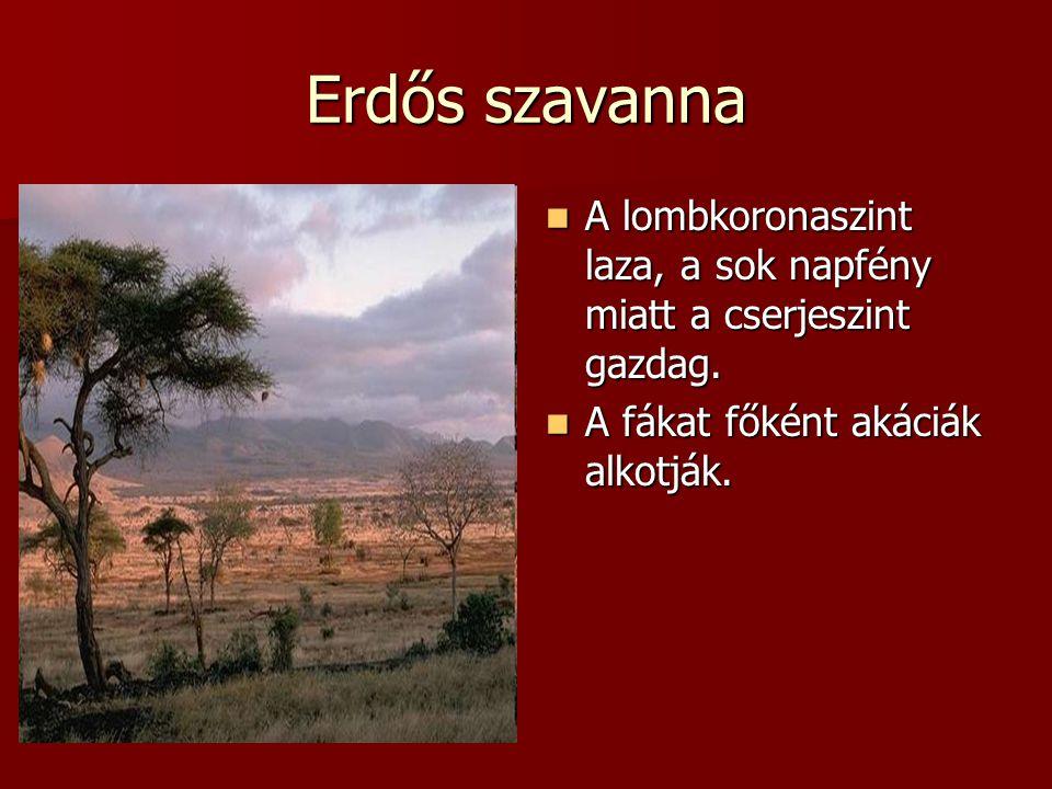 Erdős szavanna A lombkoronaszint laza, a sok napfény miatt a cserjeszint gazdag.