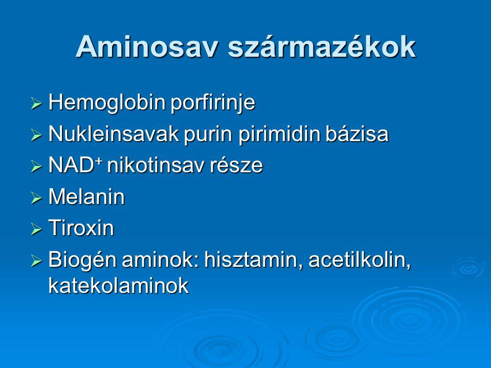 Aminosav származékok Hemoglobin porfirinje