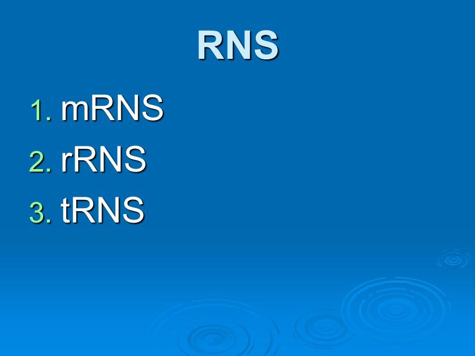 RNS mRNS rRNS tRNS