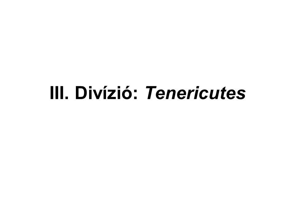III. Divízió: Tenericutes
