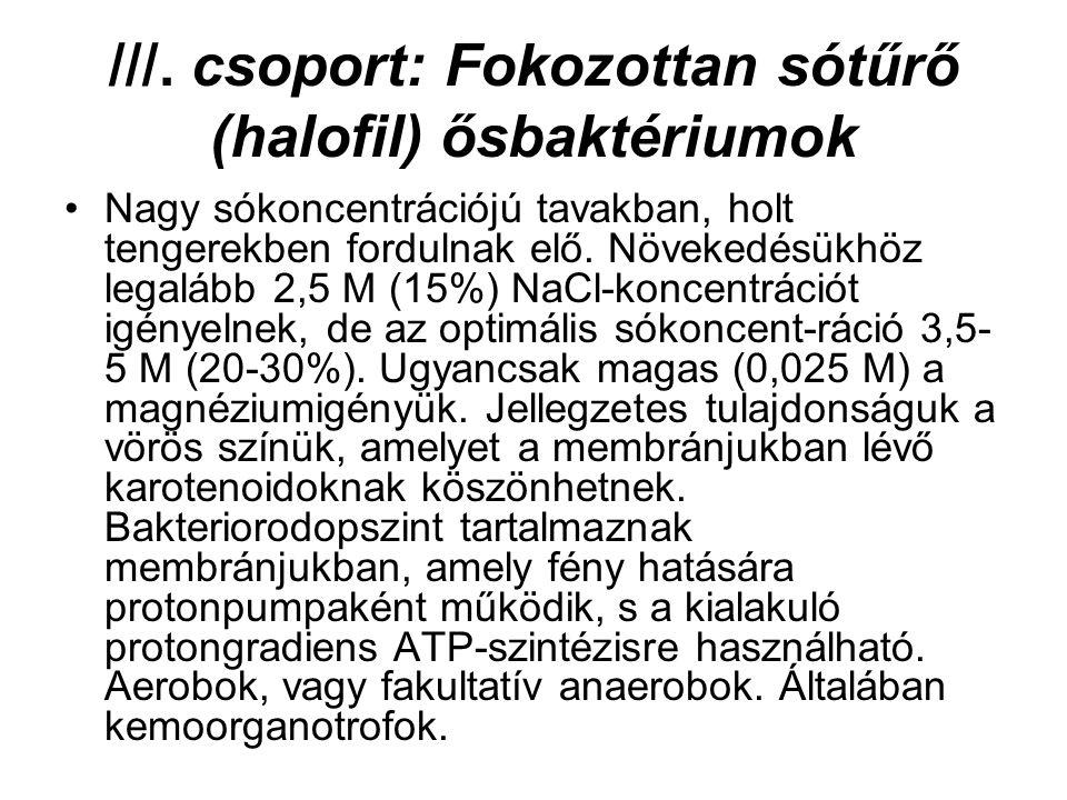 ///. csoport: Fokozottan sótűrő (halofil) ősbaktériumok