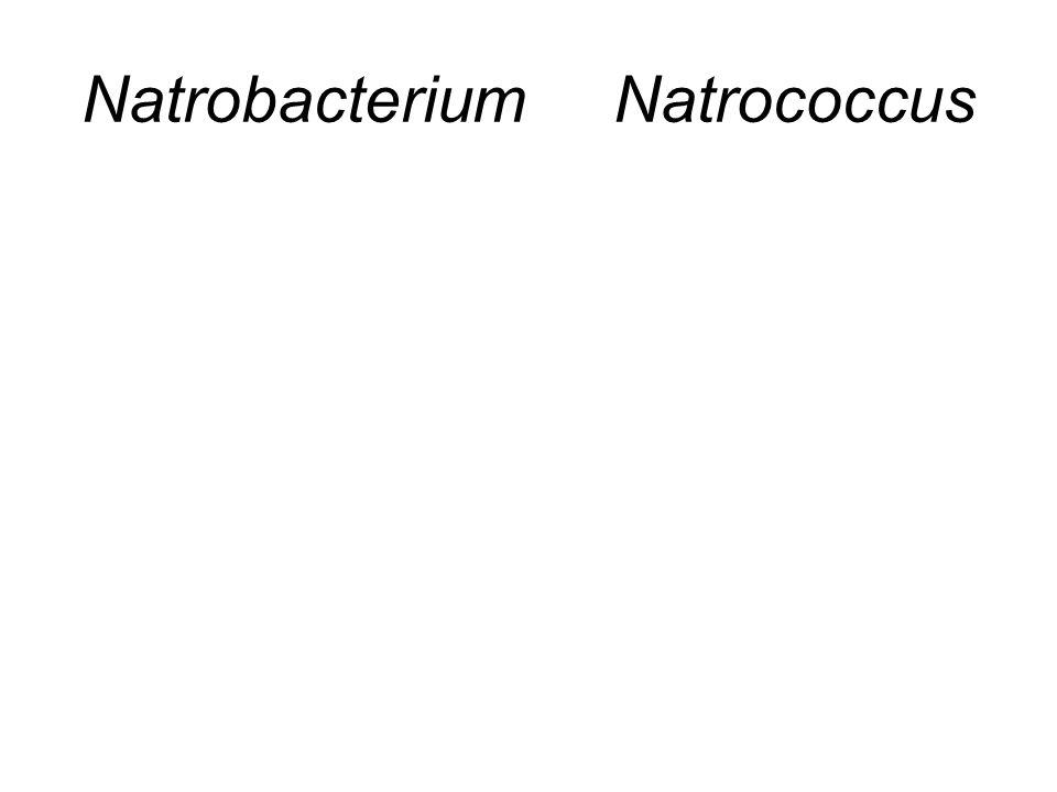 Natrobacterium Natrococcus
