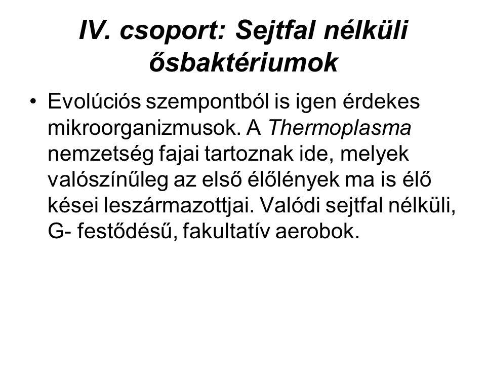IV. csoport: Sejtfal nélküli ősbaktériumok