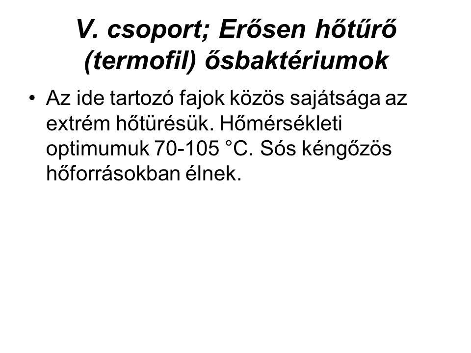 V. csoport; Erősen hőtűrő (termofil) ősbaktériumok