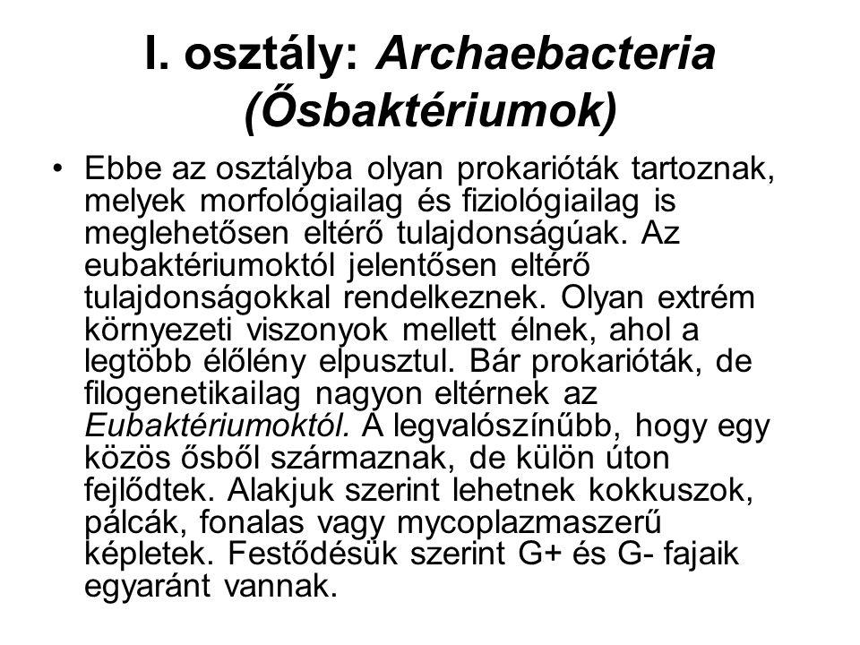 I. osztály: Archaebacteria (Ősbaktériumok)