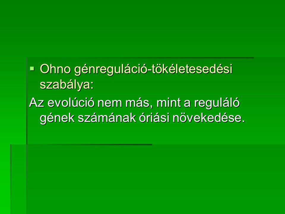 Ohno génreguláció-tökéletesedési szabálya: