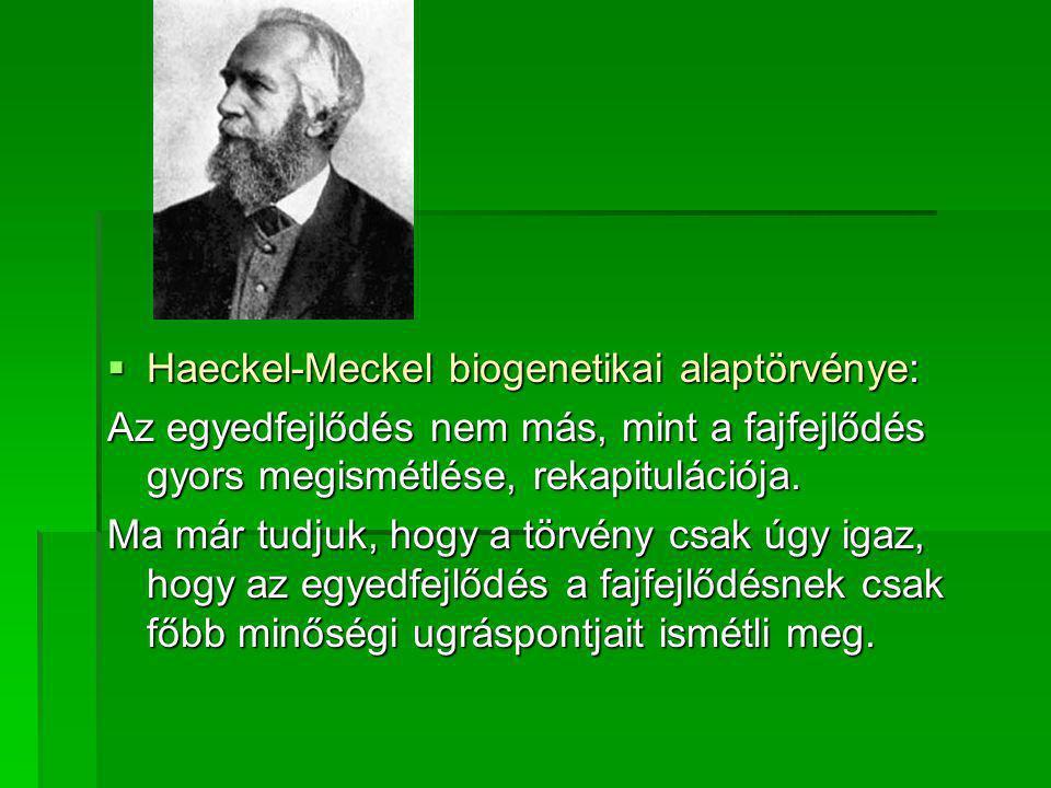 Haeckel-Meckel biogenetikai alaptörvénye: