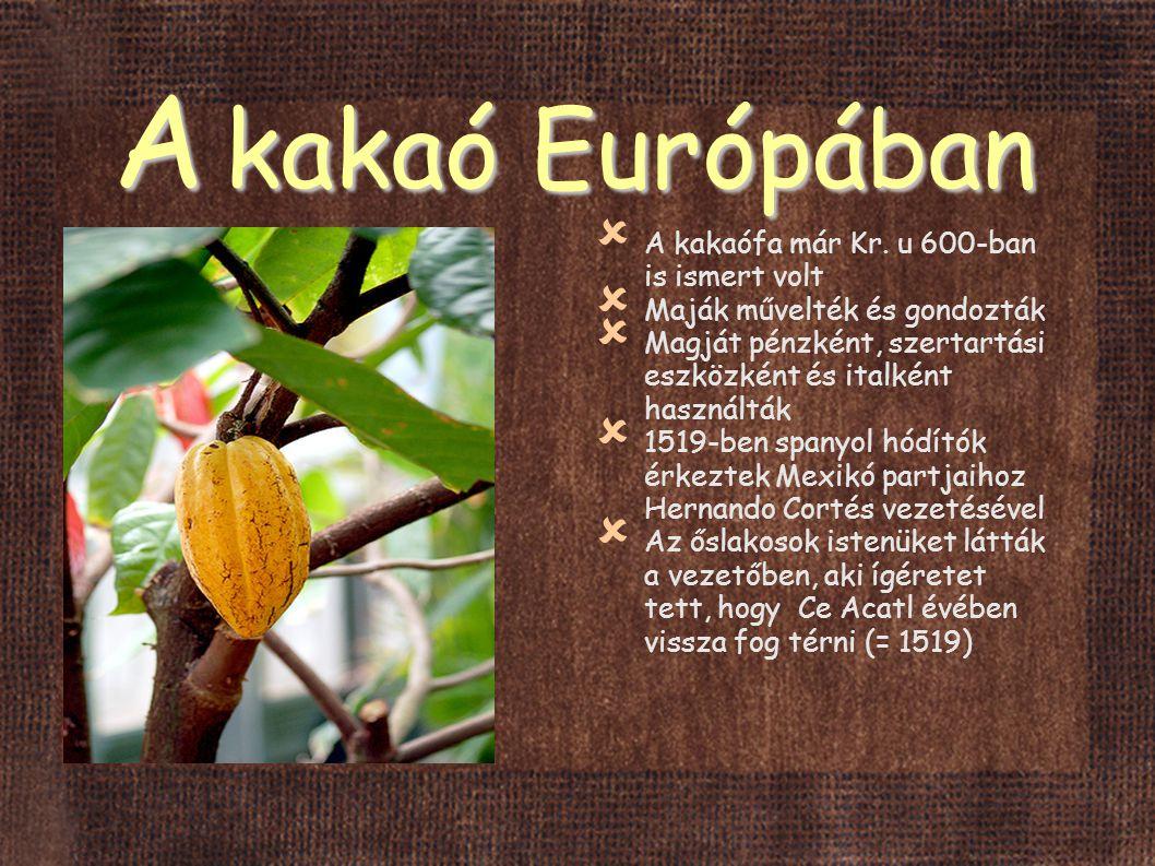 A kakaó Európában A kakaófa már Kr. u 600-ban is ismert volt