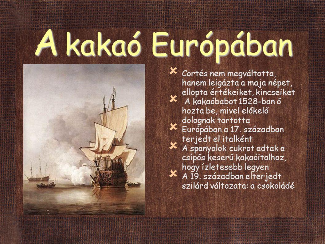 A kakaó Európában Cortés nem megváltotta, hanem leigázta a maja népet, ellopta értékeiket, kincseiket.