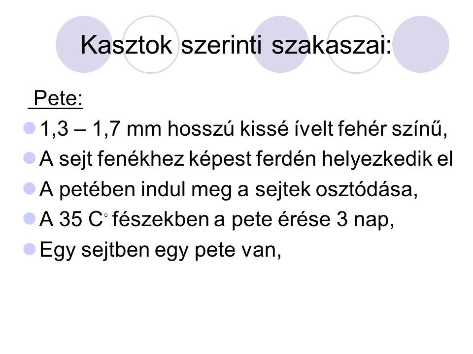 Kasztok szerinti szakaszai: