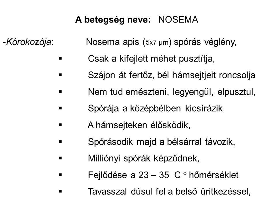 A betegség neve: NOSEMA