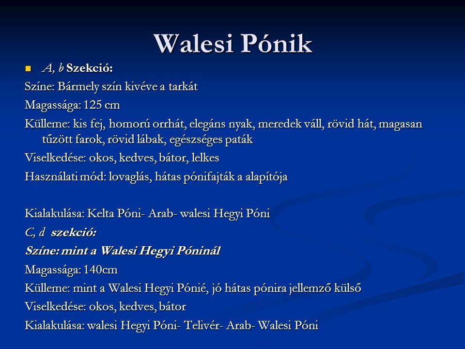 Walesi Pónik A, b Szekció: Színe: Bármely szín kivéve a tarkát