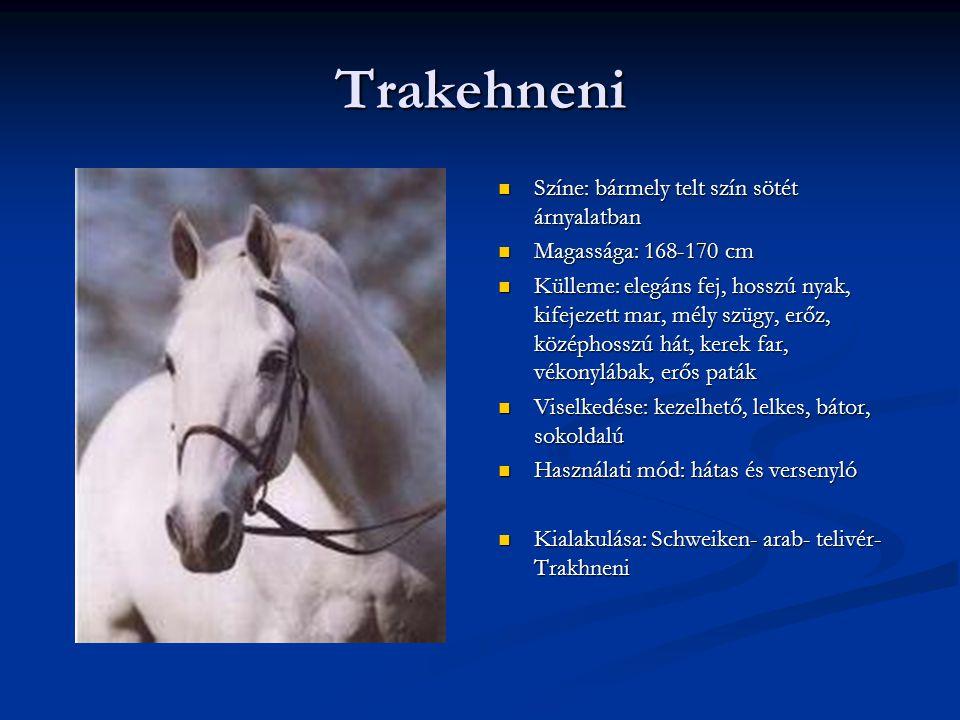 Trakehneni Színe: bármely telt szín sötét árnyalatban