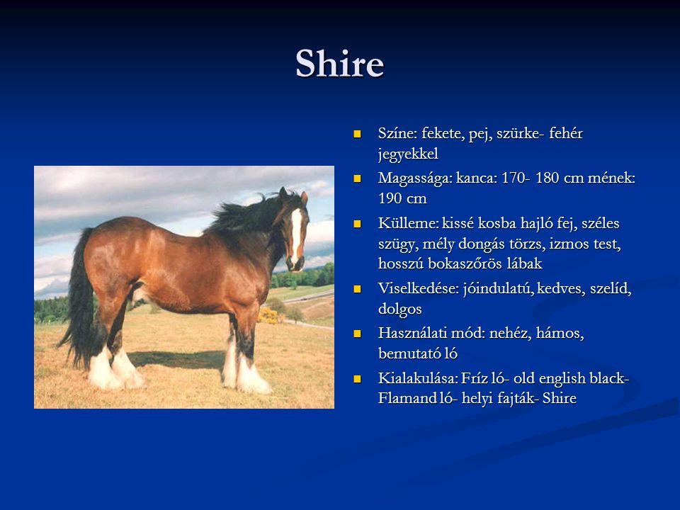 Shire Színe: fekete, pej, szürke- fehér jegyekkel