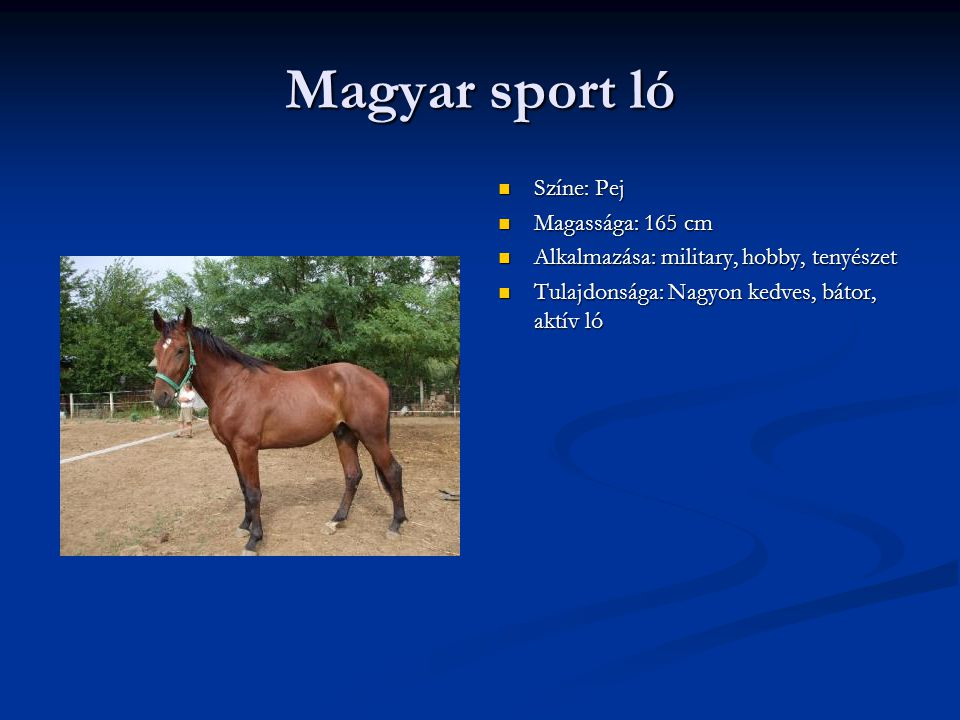 Magyar sport ló Színe: Pej Magassága: 165 cm
