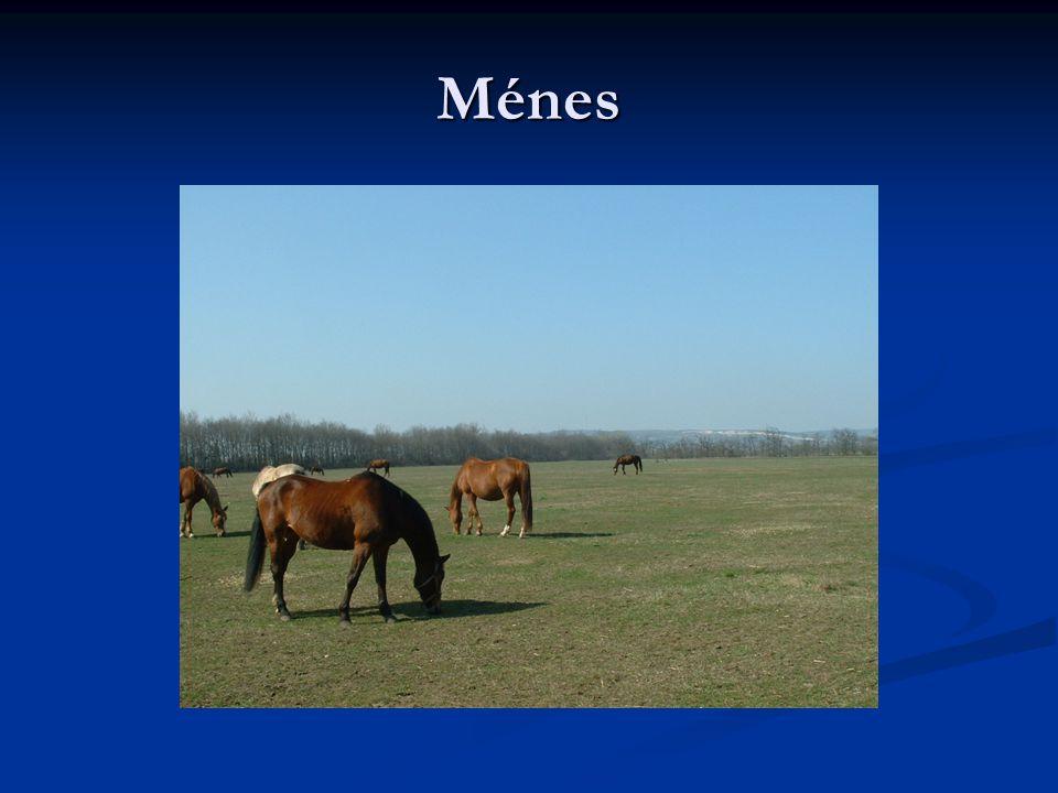 Ménes