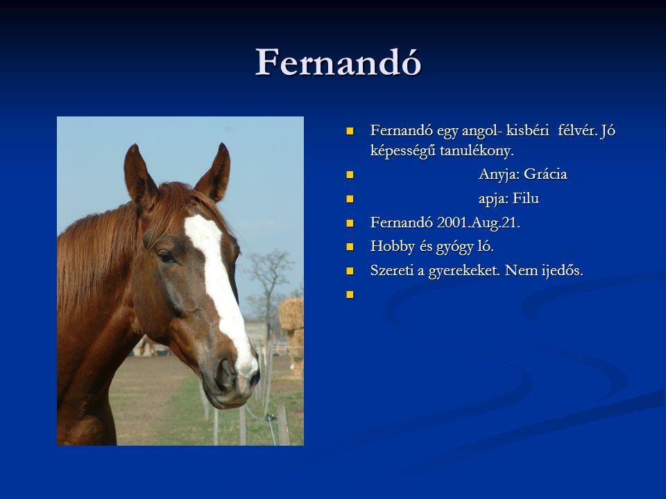 Fernandó Fernandó egy angol- kisbéri félvér. Jó képességű tanulékony.