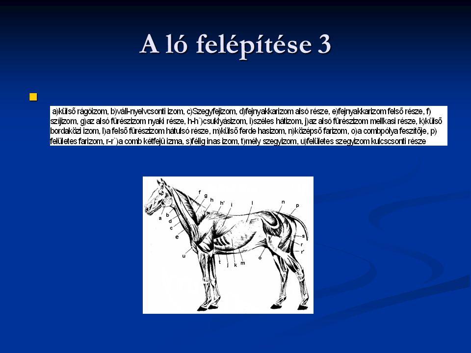 A ló felépítése 3