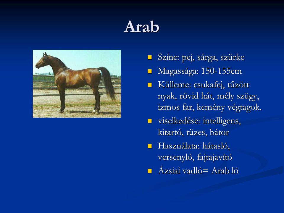 Arab Színe: pej, sárga, szürke Magassága: 150-155cm