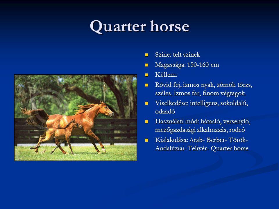 Quarter horse Színe: telt színek Magassága: 150-160 cm Küllem: