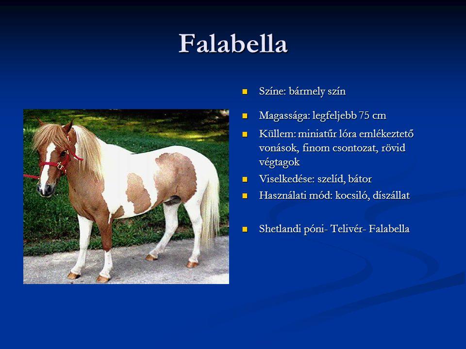 Falabella Színe: bármely szín Magassága: legfeljebb 75 cm