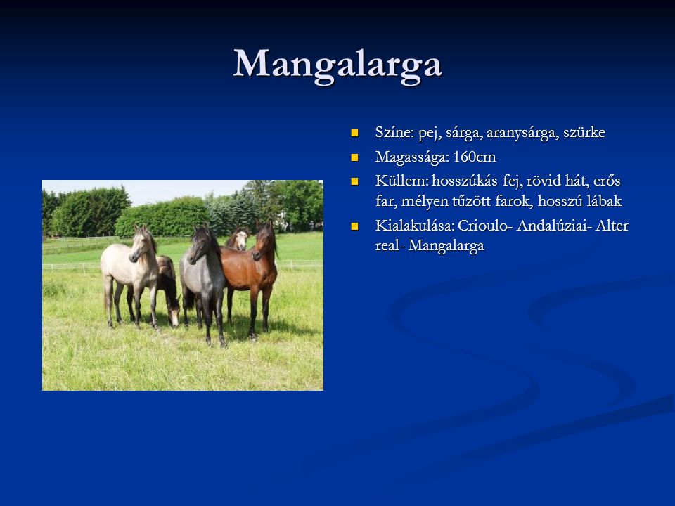 Mangalarga Színe: pej, sárga, aranysárga, szürke Magassága: 160cm